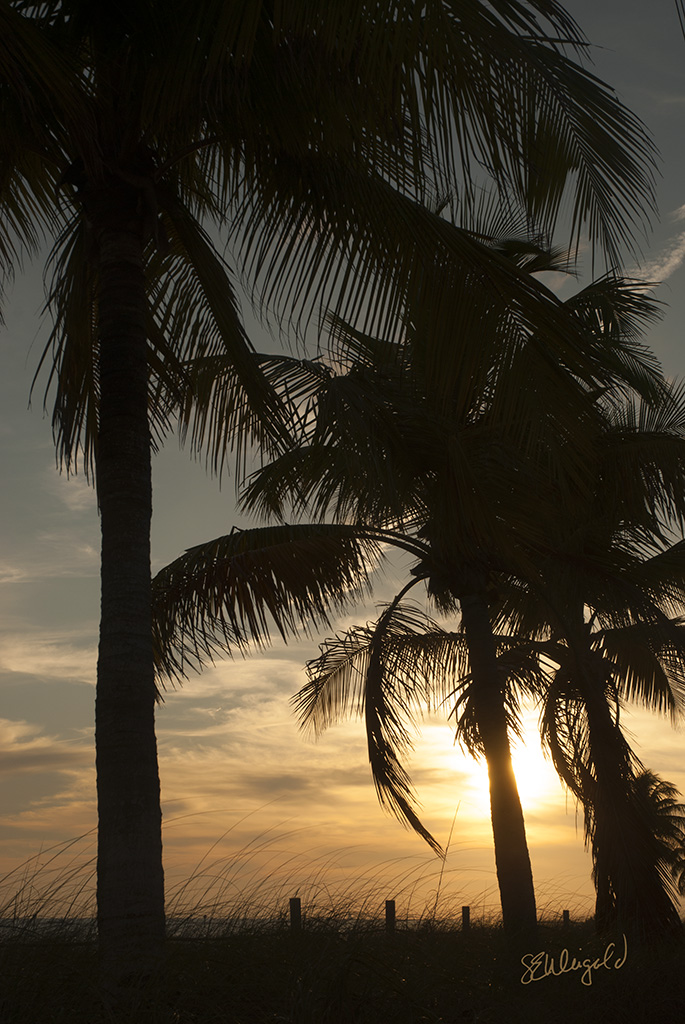 Sunset in the Palms